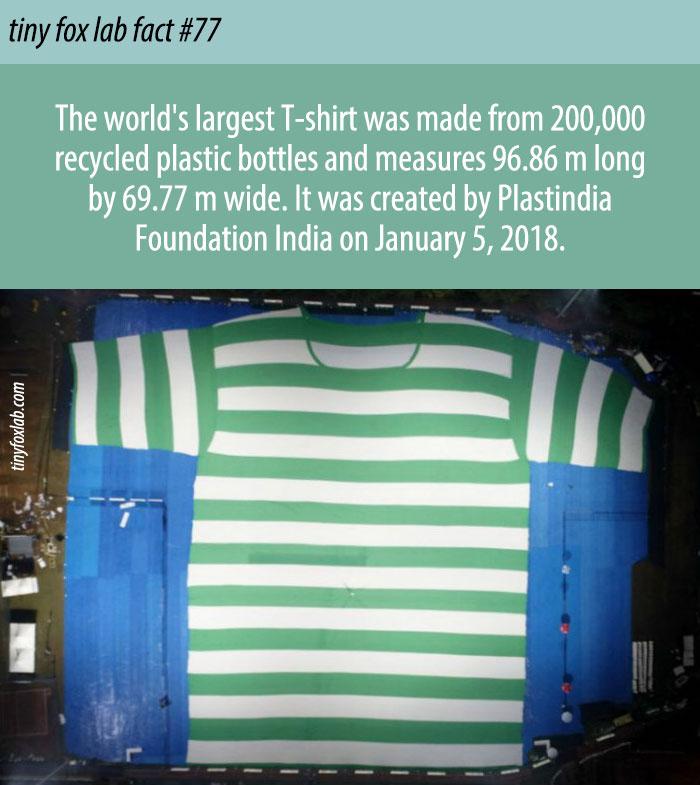 Largest T-shirt