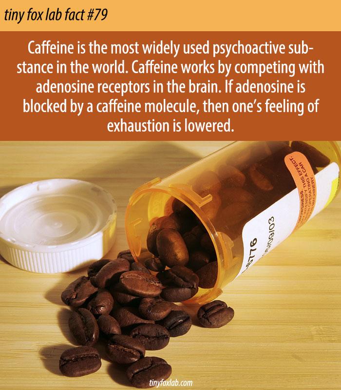 The World's Most Popular Psychoactive Drug