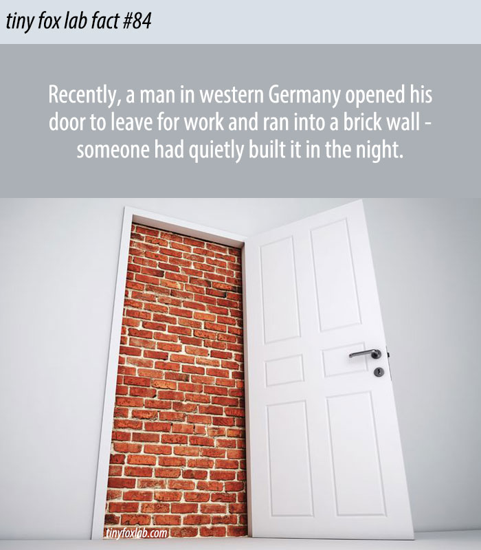Man walks Into a Brick Wall