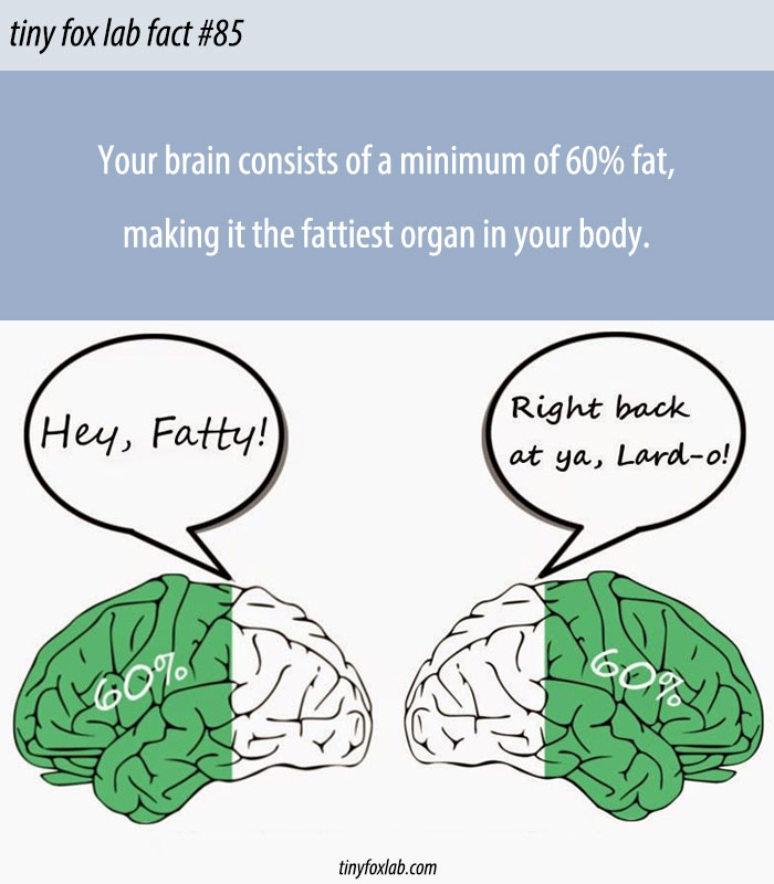 Your Brain is Mostly Fat