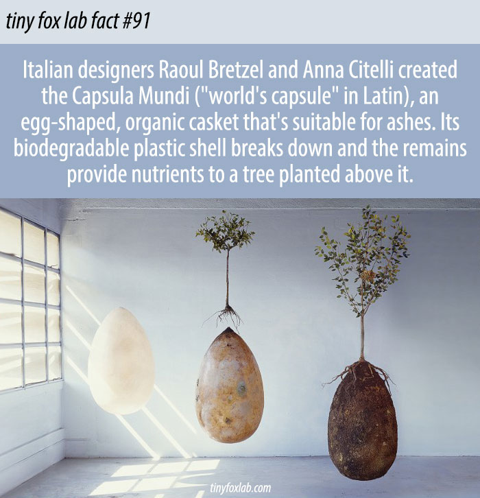 Biodegradable Burial Pod Turns Your Body Into a Tree