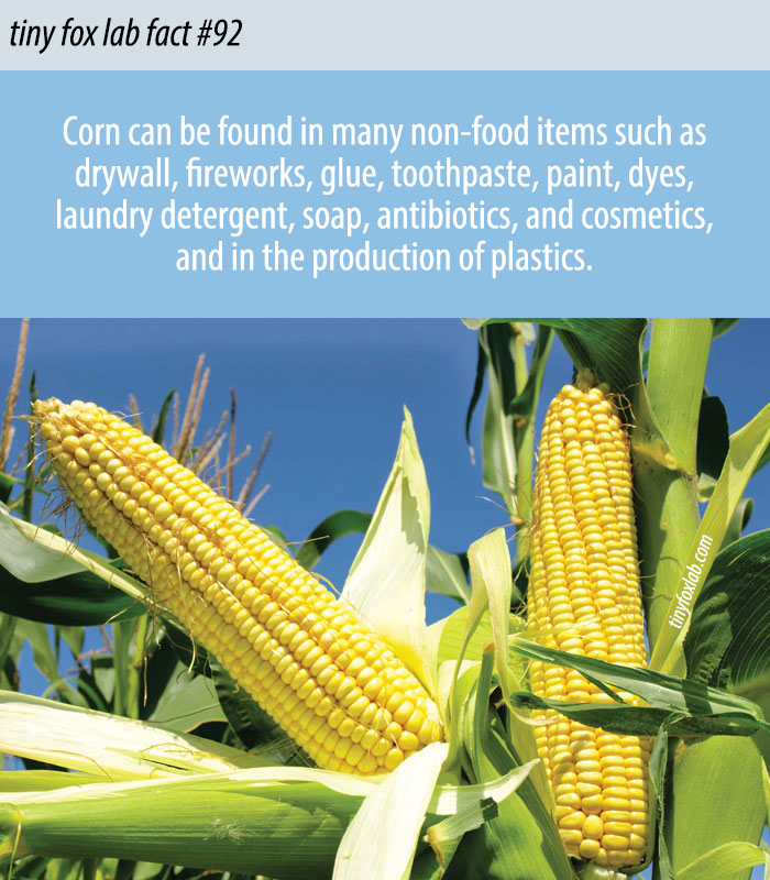 Corn is All Around Us