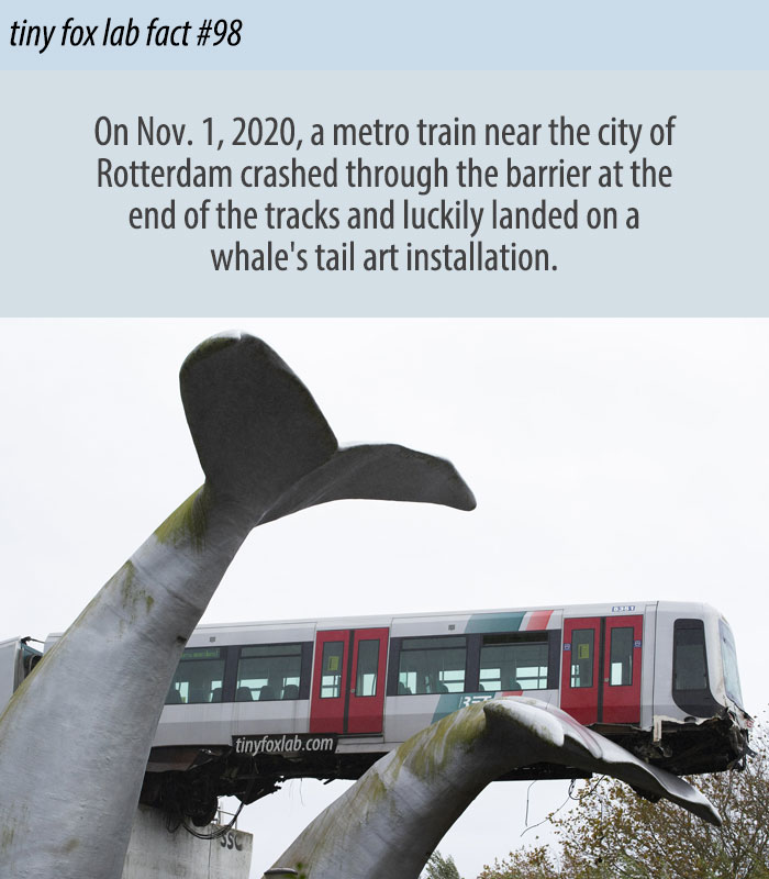 Whale Sculpture Catches Crashed Metro Train