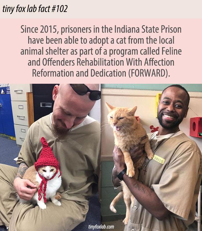 Prisoners Adopting Cats