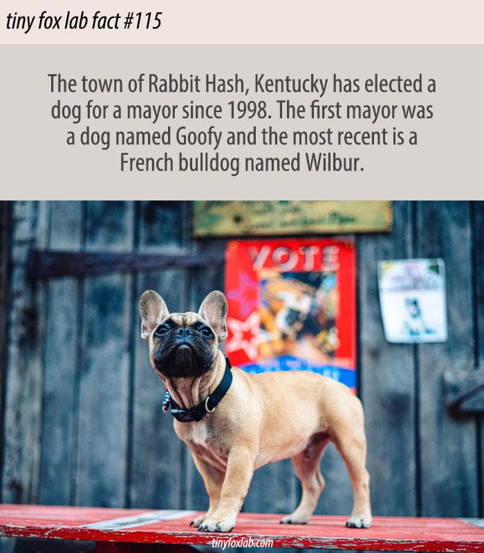 The Dog Mayor of Rabbit Hash