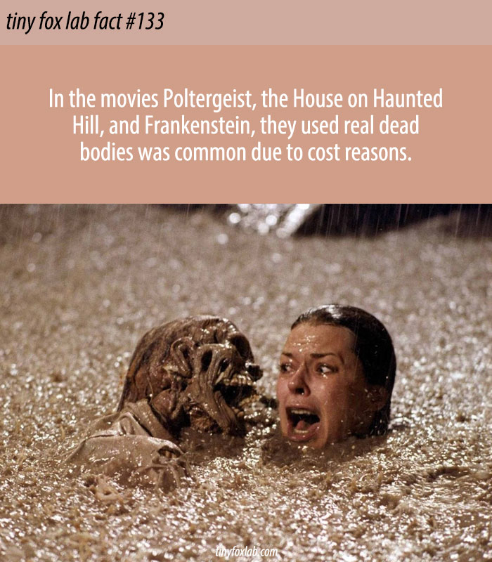 Films With Real Dead Bodies