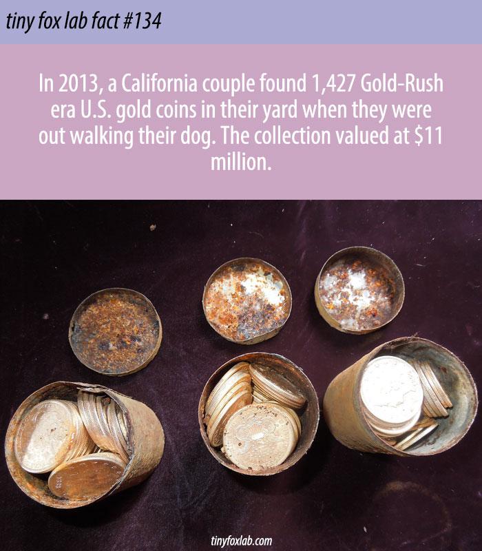 Couple Finds Buried Treasure Worth Millions