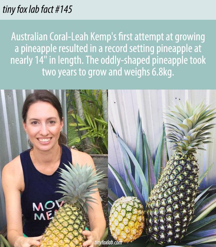 Pineapple World Records