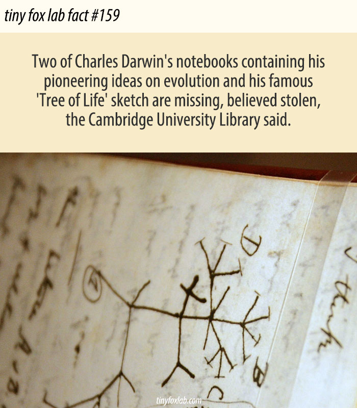 Darwin's Notebooks May Have Been Stolen