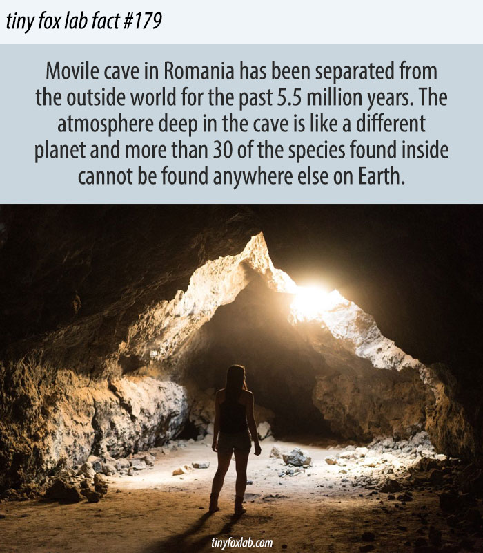 Movile Cave