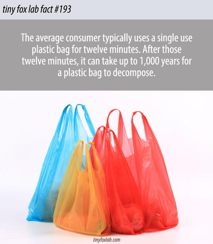 The Lifespan of a Plastic Bag