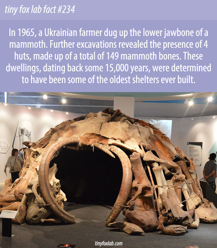 Old Huts Built from Mammoth Bones