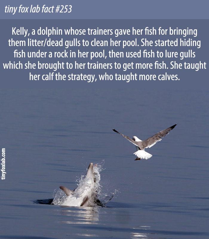 Kelly, the Gull-Baiting Dolphin