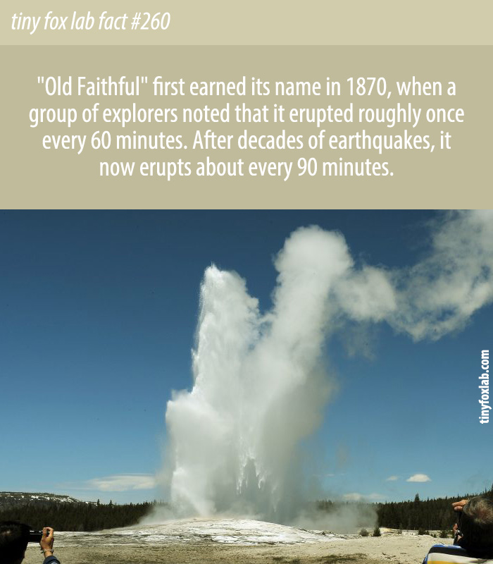 Old Faithful is Not As Faithful As It Once Was