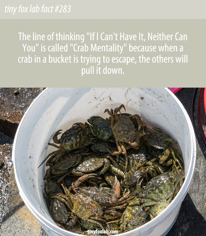 What Does Crab Mentality Mean?