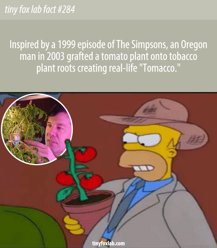 Products Produced from The Simpsons