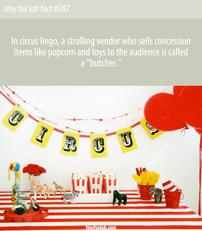 In circus lingo, a strolling vendor who sells concession items like popcorn and toys to the audience is called a 'butcher.'