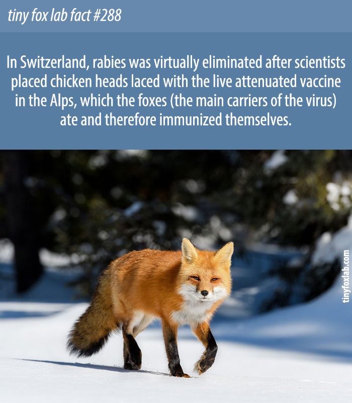 How Switzerland Rid Themselves of Rabies