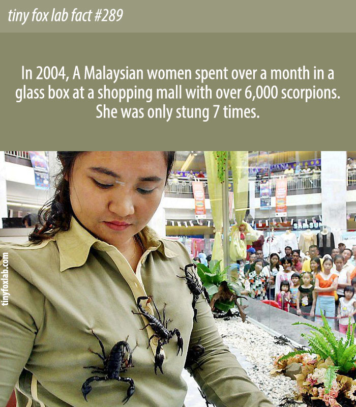 A Malaysian women spent over a month in a glass box at a shopping mall with over 6,000 scorpions.