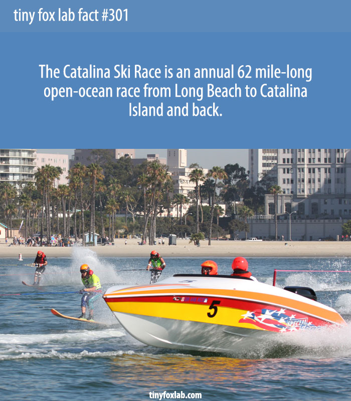 The Catalina Ski Race is an annual 62 mile-long open-ocean race from Long Beach to Catalina Island and back.