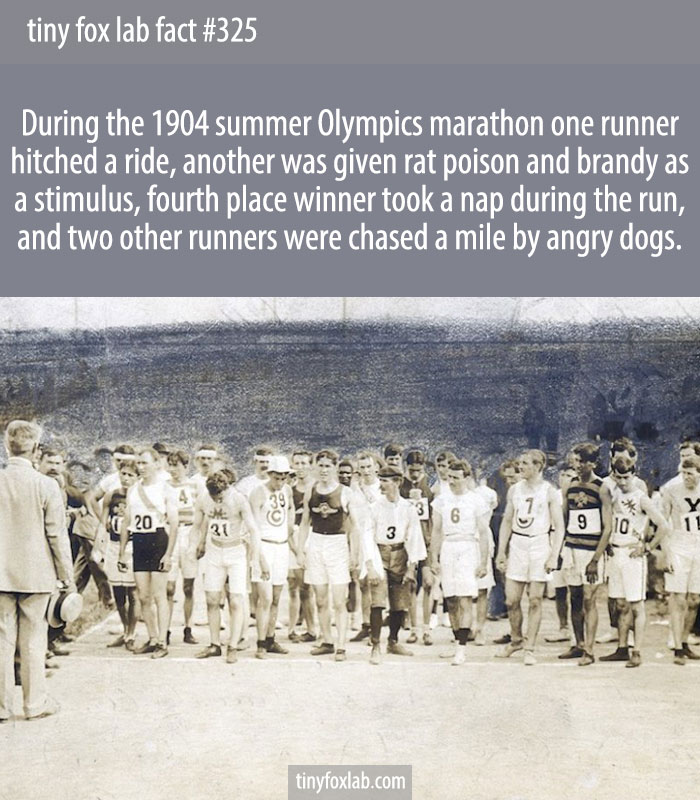 During the 1904 summer Olympics marathon one runner hitched a ride, another was given rat poison and brandy as a stimulus, fourth place winner took a nap during the run, and two other runners were chased a mile by angry dogs.