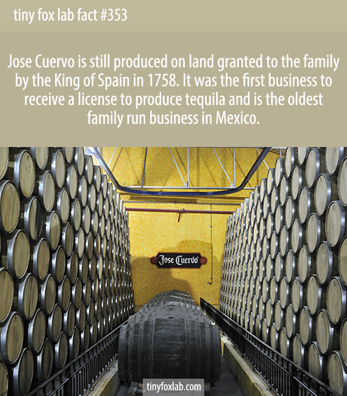 Jose Cuervo is still produced on land granted to the family by the King of Spain in 1758. It was the first business to receive a license to produce tequila and is the oldest family run business in Mexico.