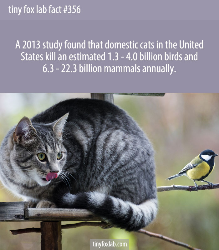 Domestic cats kill between 1.3 billion and 4 billion birds annually in the United States.