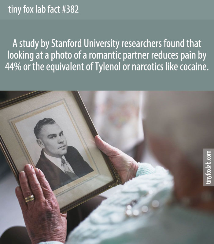 A study by Stanford University researchers found that looking at a photo of a romantic partner reduces pain by 44% or the equivalent of Tylenol or narcotics like cocaine.