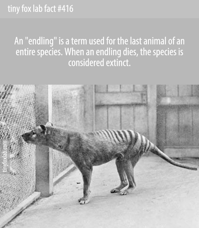 An endling is the last known individual of a species or subspecies. Once the endling dies, the species becomes extinct.