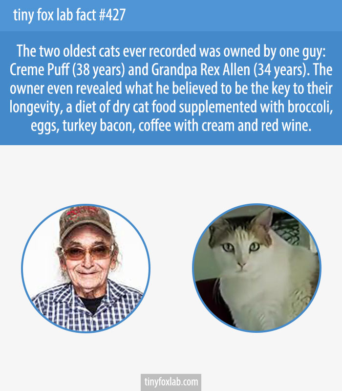 The two oldest cats ever recorded was owned by one guy: Creme Puff (38 years) and Grandpa Rex Allen (34 years).