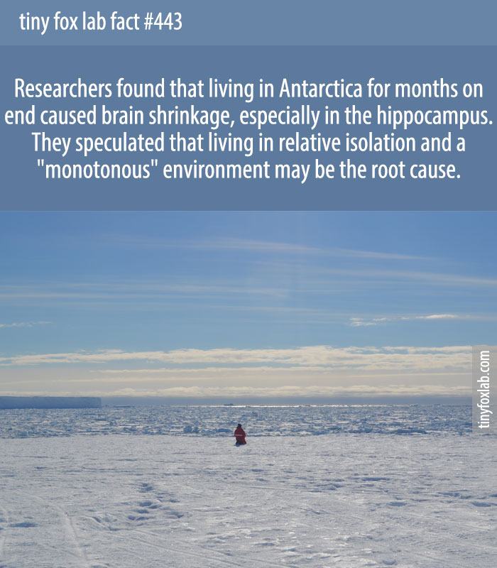 Researchers found that living in Antarctica for months on end caused brain shrinkage, especially in the hippocampus.
